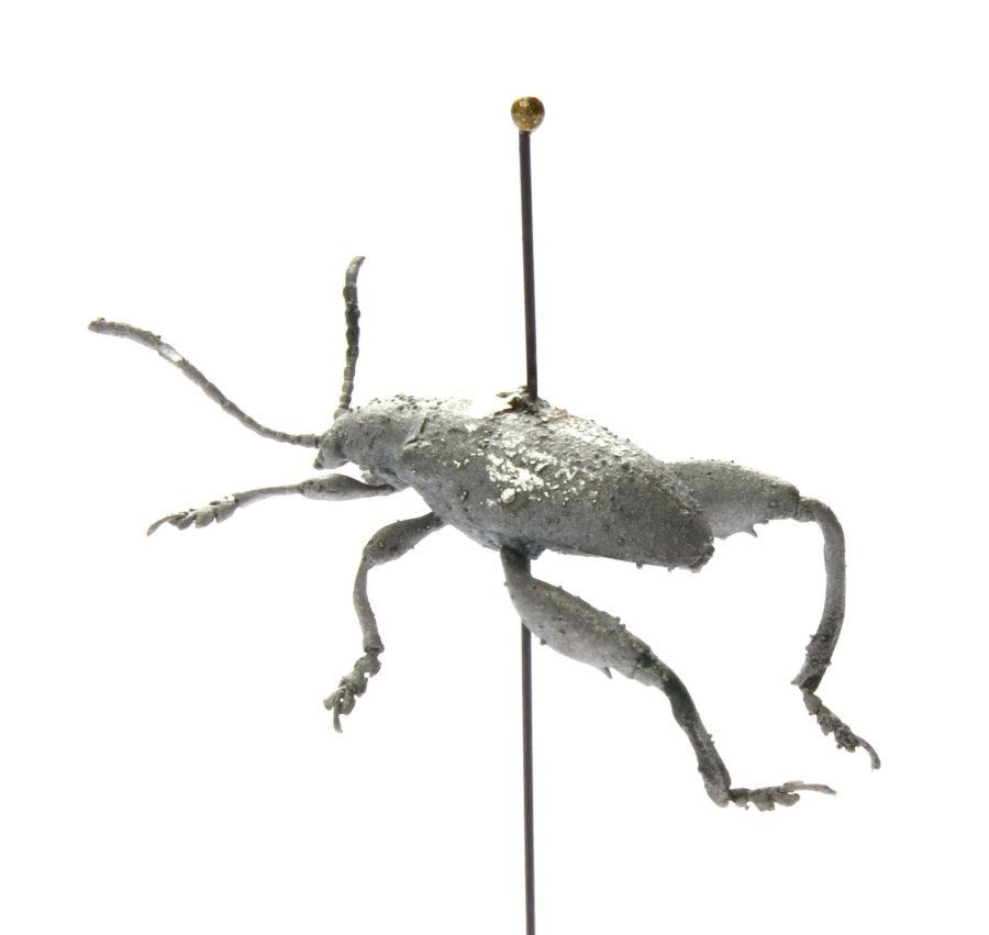 Froschkäfer von der Seite | 2016