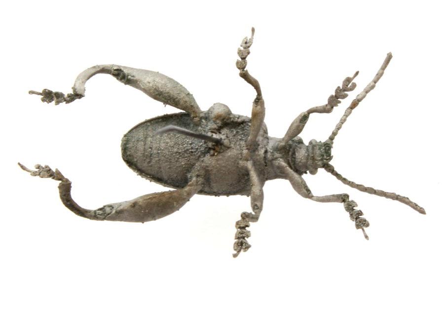 Froschkaefer von unten | 2016