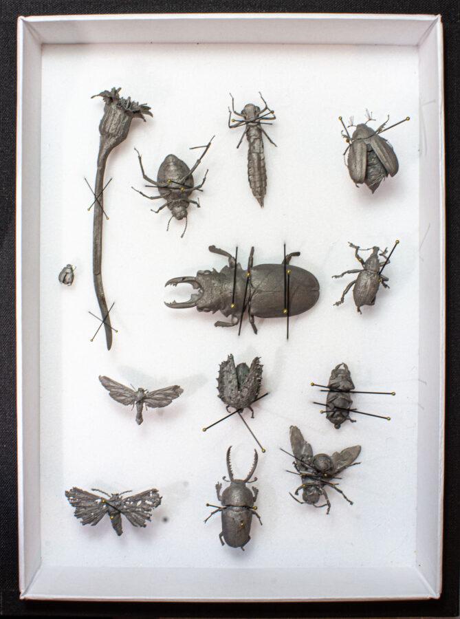 Insektensammlung | 2019